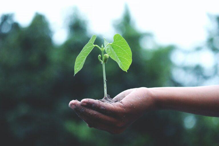 Metáfora de sostenibilidad